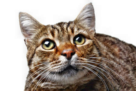 gaze: Cat kitten gaze regard glance look  head isolated
