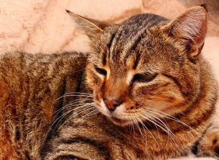 Cat kitten gaze regard glance look beautiful head Stock Photo
