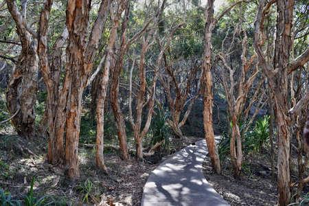 Forest Way at Noosa Heads National Park, Queensland Australia.