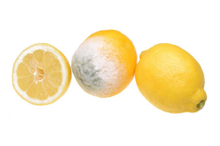 Lemon with mold and fresh lemon isolated on white background Stock Photo