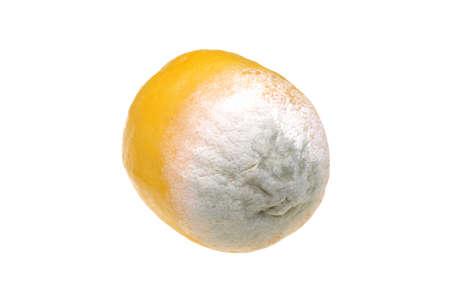 Lemon with mold isolated on white background