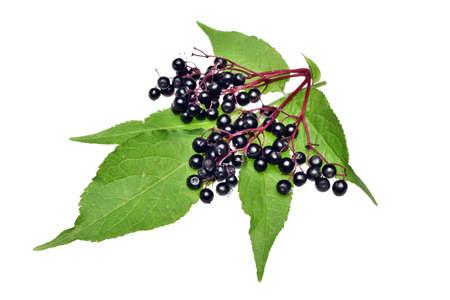 Gałązka z czarnym bzem i liściem leżącym na białym tle Zdjęcie Seryjne