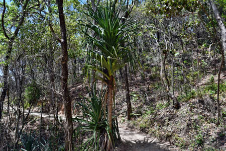 Forest Way at Noosa National Park, Queensland Australia 写真素材