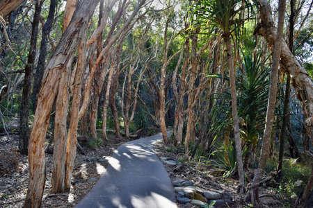Forest Way at Noosa National Park, Queensland Australia