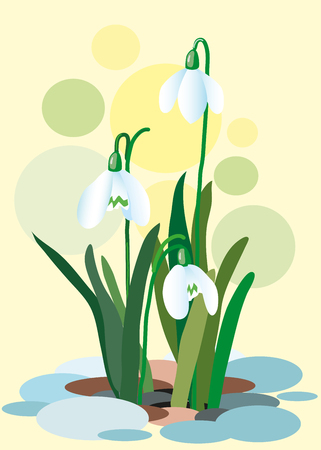 contentment: Snowdrops on a abstract background. Spring illustration. Illustration of flowers. Spring. Vector illustration