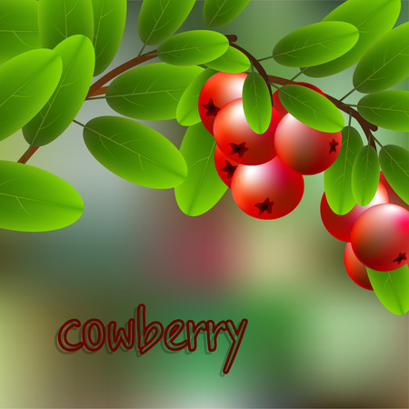 cowberry: Red, juicy, sweet cowberry on a branch for your design. Vector illustration