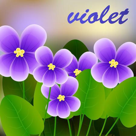 hillside: Spring background with blossom brunch of violet flowers. Vector illustration
