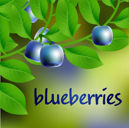 bilberry: Blue-black, juicy, sweet blueberry on a branch for your design. Vector illustration