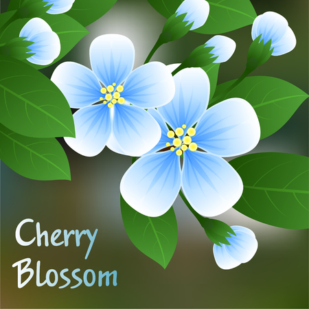 vinous: Flowering cherry. Blue flowers on a branch with green leaves and place for text. Vector illustration