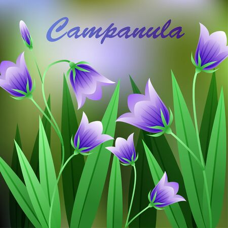 campanula: Beautiful Flower, Illustration of Campanula Rotundifolia Flower or Harebell with Green Leaves on Tree Branch. Vector illustration Illustration
