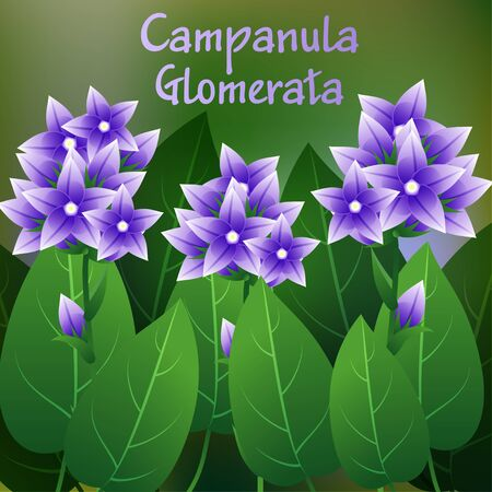 campanula: Beautiful Flower, Illustration of Campanula glomerata Flower or Harebell with Green Leaves on Tree Branch. Vector illustration