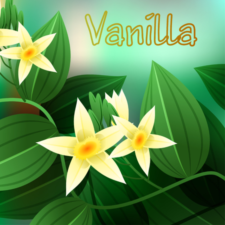 aerial roots: Vanilla orchid, Vanila planifolia, with green leaves and aerial roots. Vector illustration