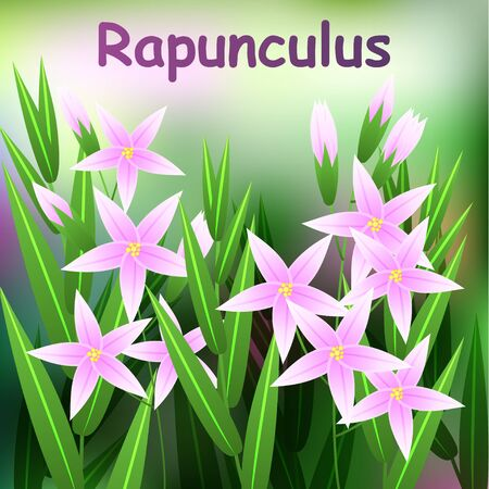 campanula: Beautiful Flower, Illustration of Campanula rapunculus Flower or Harebell with Green Leaves on Tree Branch. Vector illustration
