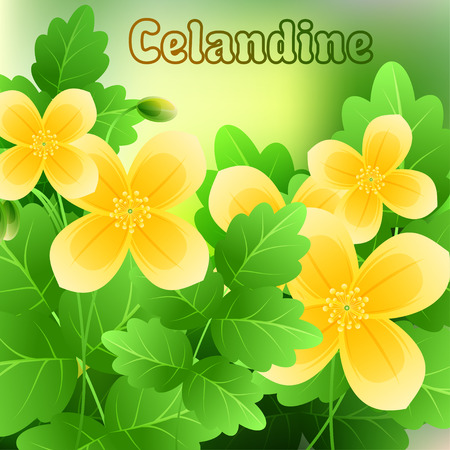stamens: Beautiful spring flowers Celandine. Cards or your design with space for text. Vector illustration