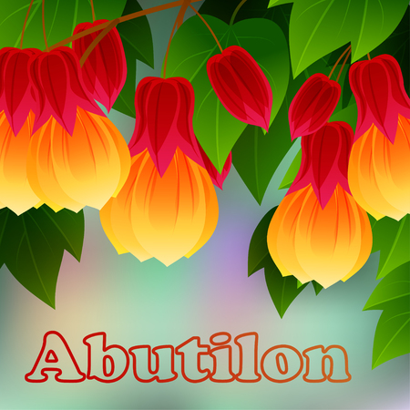 plantae: Red Vein Chinese Lantern Abutilon pictum with flowers. Misiones Rainforest, Argentina, South America. Vector illustration