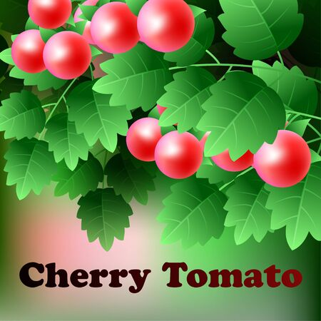 cherry tomato: Ripe, red, juicy cherry tomato hang on a green branch. Vector illustration