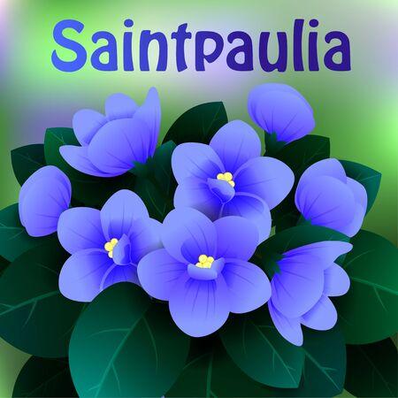 Belles fleurs de printemps Saintpaulia. Cartes ou votre design avec espace pour le texte. Vector illustration Vecteurs