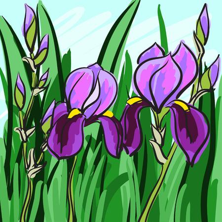 flavor: Violet iris hand-drawn on green background for your design. Vector illustration Illustration