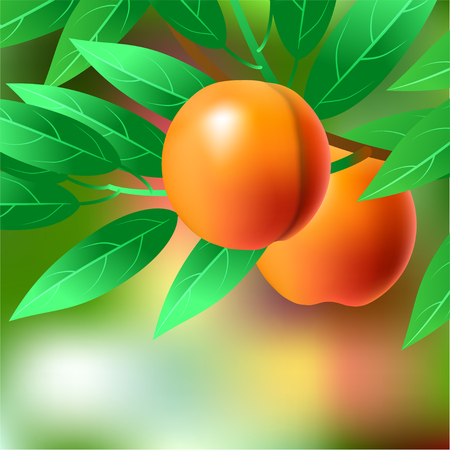 Orange, juicy, sweet peach on a branch for your design. illustration 版權商用圖片