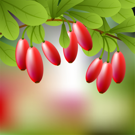 Red, juicy barberry on a branch for your design. illustration