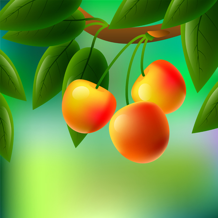 Yellow, juicy, sweet cherries on a branch for your design. illustration