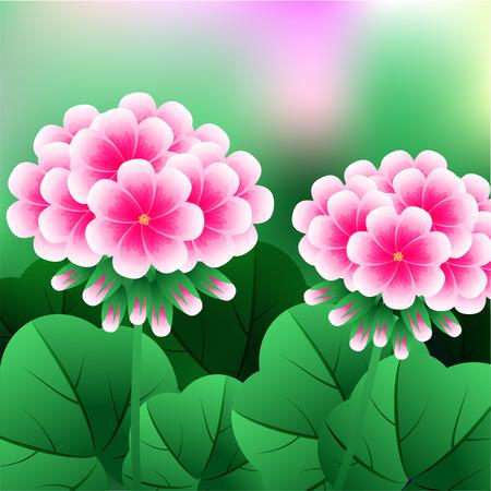 Beautiful Flower, Illustration Bunch of Beautifull Red Geranium Flowers or Pelargonium Graveolens. illustration Stock Photo