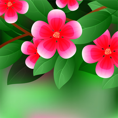 Beautiful spring flowers Chaenomeles. Cards or your design with space for text. illustration