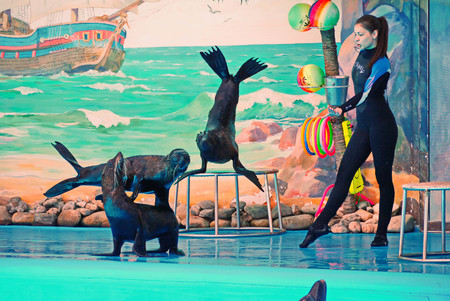 KIEV, UKRAINE - July 20, 2016: Performance of fur seals in the dolphinarium. Diving