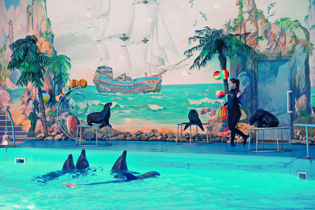 KIEV, UKRAINE - July 20, 2016: Performance of dolphins in the Dolphinarium Diving