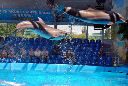 jump from the waters of the beautiful dolphin mammals to the dolphinarium for visitors