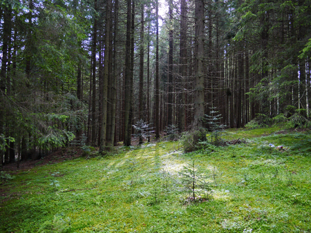 A spacious green forest glade against the backdrop of enchanting hibernating trees. A place to relax for children and adults