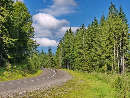 asphalt road through a green coniferous forest under a blue cloudy sky. a place of rest, tourism, picnic Banco de Imagens