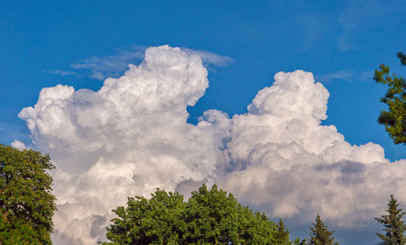 Lush green treetops against a light blue sky with massive white clouds