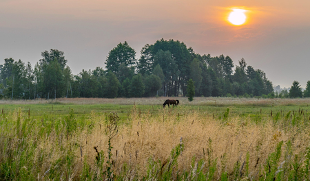 a lonely horse peacefully grazing on a green meadow against a rising sun