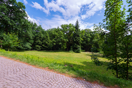 A green glade near a walking alley amid tall trees in the distance Archivio Fotografico