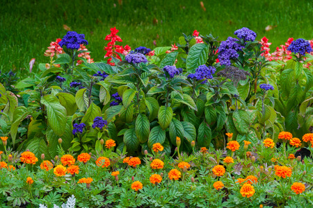 beautiful flowers of various coloring on the green flower-pleasing flower bed Stock Photo