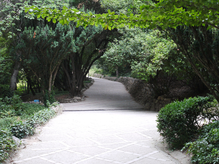 the alley in the park with dense tall green bushes and trees bent over the paved path Imagens