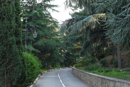 descent of the road between the plantings of beautiful coniferous trees and vintage lantern in the park