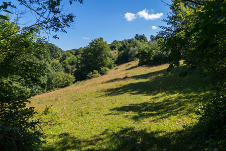 good place for a picnic green glade on a slope between trees with a transparent blue sky at the top