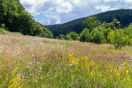 bright field grass between the dry grass in the glade near the tall forest of the mountain 스톡 콘텐츠