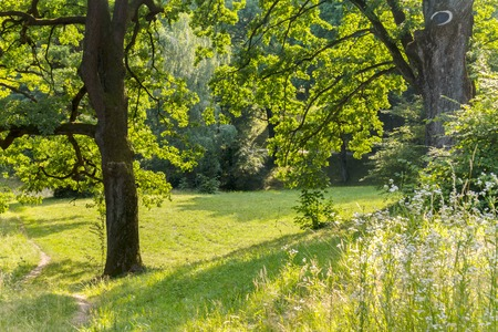 A wonderful green forest glade between two huge trees. Place for picnic and rest 스톡 콘텐츠