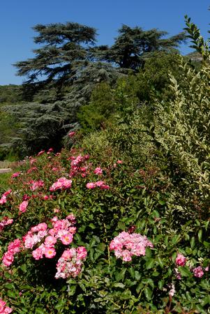 A few bushes of fragrant tea roses. They make a wonderful jam