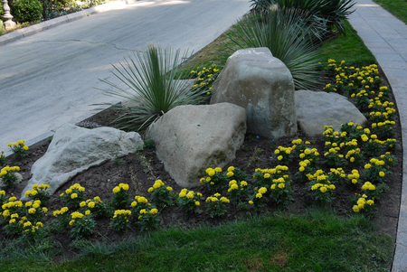 The stones lying in a flower bed with beautiful yellow flowers growing around them with walkways on either side of them.