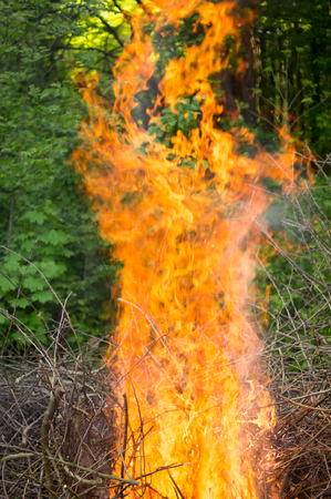 Bright big bonfire while burning a large number of garbage branches .For your design