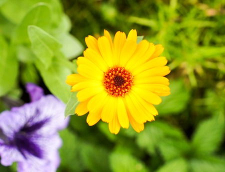 Beautiful yellow flower outdoors in summer on a bright sunny day .For your design Imagens