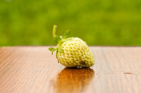 Lonely white unripe strawberry lying on the table in the sun .For your design
