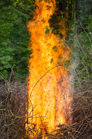 Bright big bonfire while burning a large number of garbage branches .For your design Banque d'images - 110481909