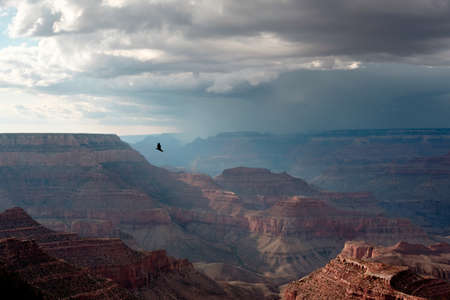 eagle canyon: Gliding bird at Grand Canyon