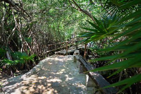 A stone pathway surrounded by tropical foliage at the Cristalino cenote, Mexico. 스톡 콘텐츠