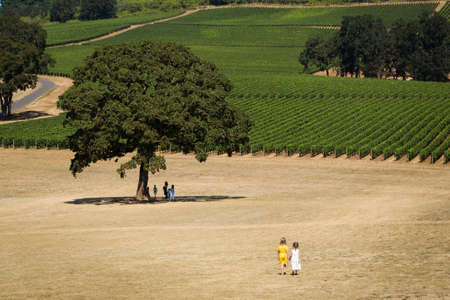 Two young girls in summer dresses holding hands walking near rows of wine grapes at a Willamette Valley winery. Stock Photo